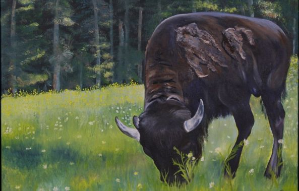 Bison at Park Omega-Rachelle Beaudry