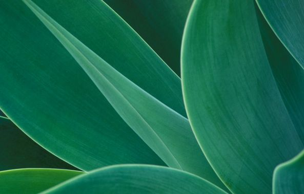 Agave Abstract-Colin RADFORD