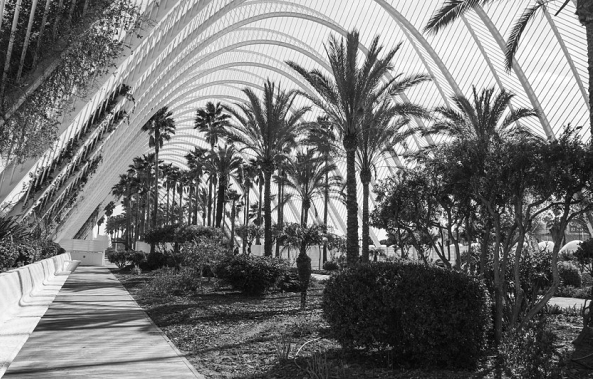 Palms And Arches-Dancho Atanasov