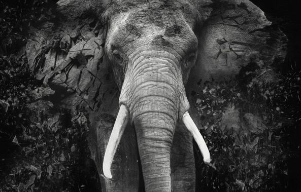 The Disappearance of the Elephant - Small-Erik Brede